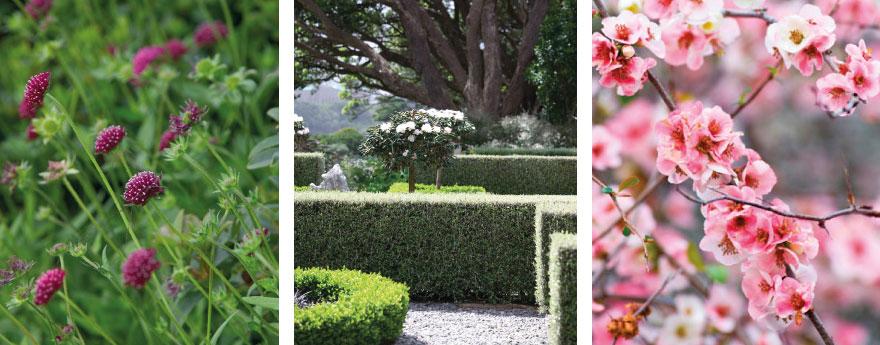 garden-care(1)